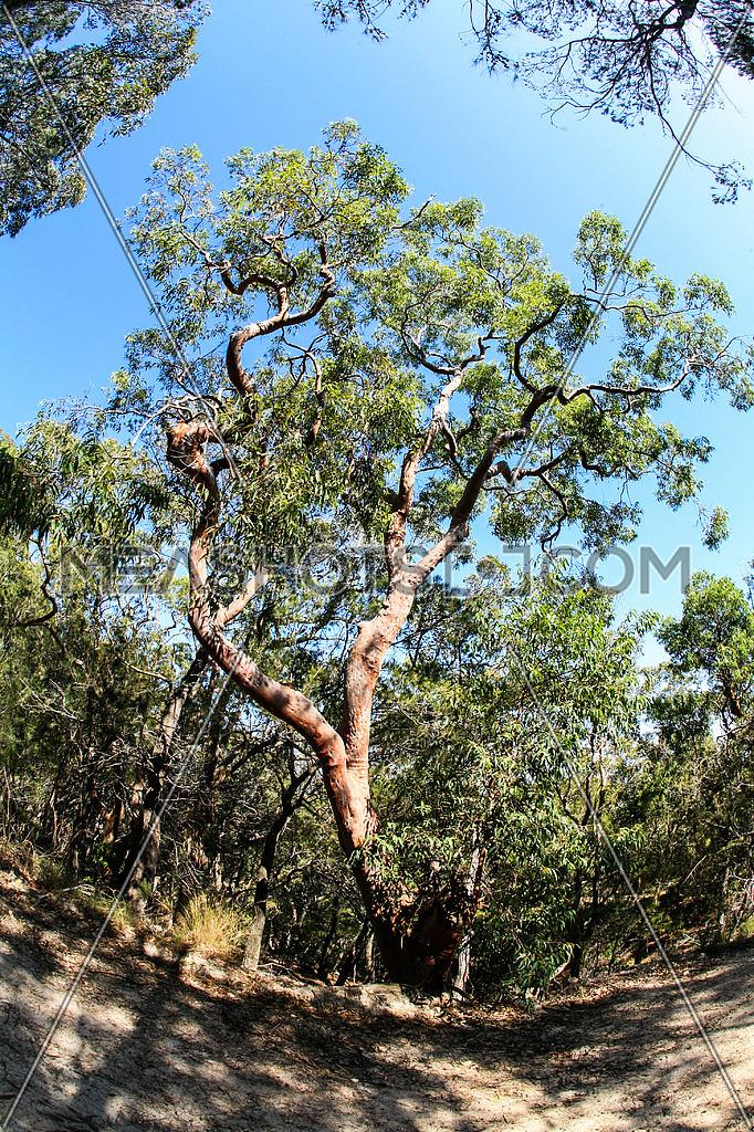 a wide angle show of a tree