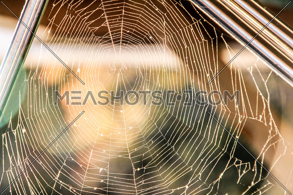 a spider web between trees