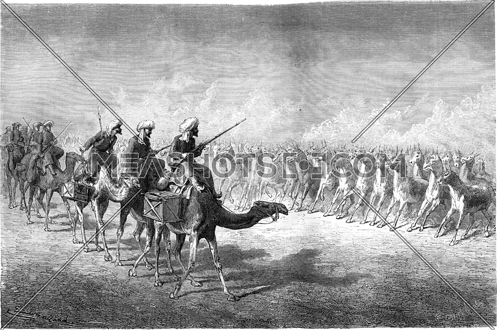 A wild donkeys army. vintage engraved illustration. Le Tour du Monde, Travel Journal, (1865).
