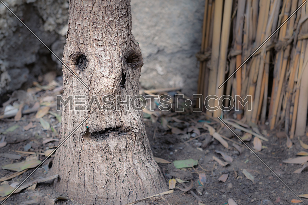 Tree stem that looks like a crying face with one teardrop on a blurred background of wicker and tree leafs fallen in the ground