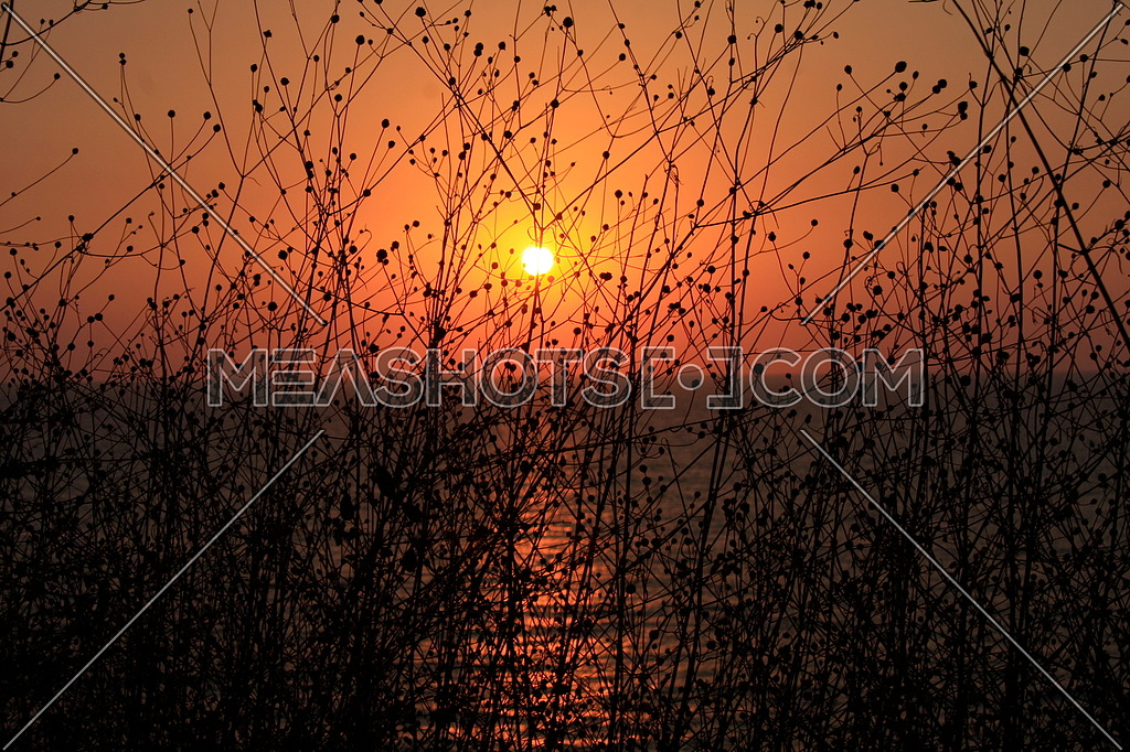 plant in silhouette against sunset