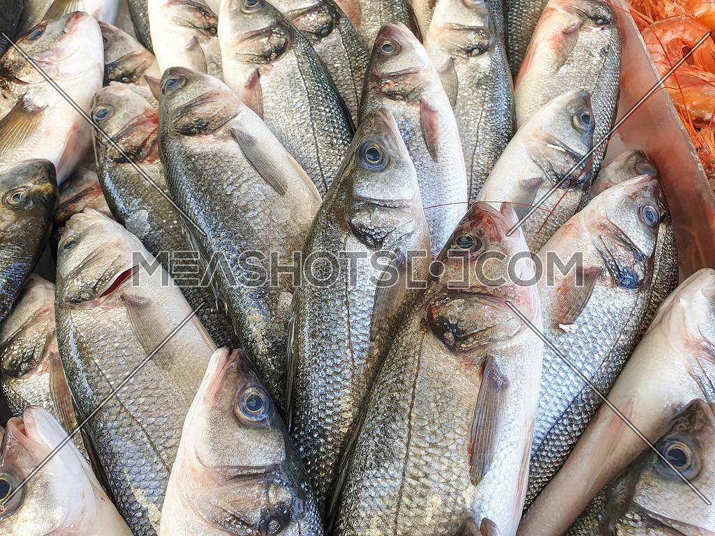 Sea bass fish on ice-226922 | Meashots