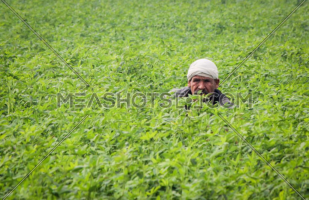 A Farmer in his field in Egypt