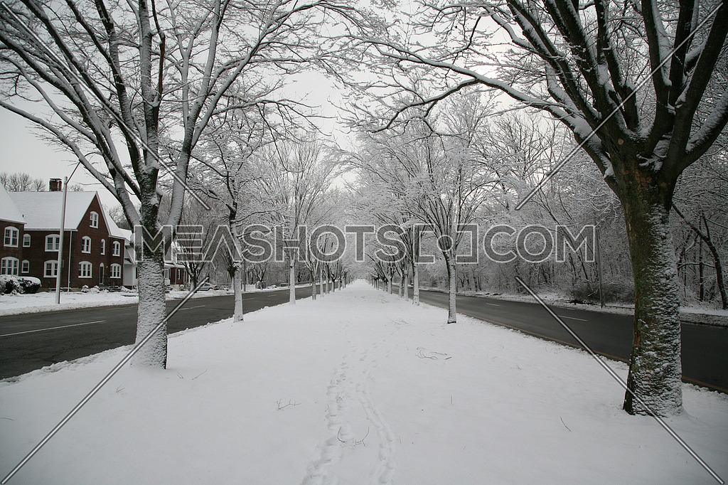Snow cover treed lined street