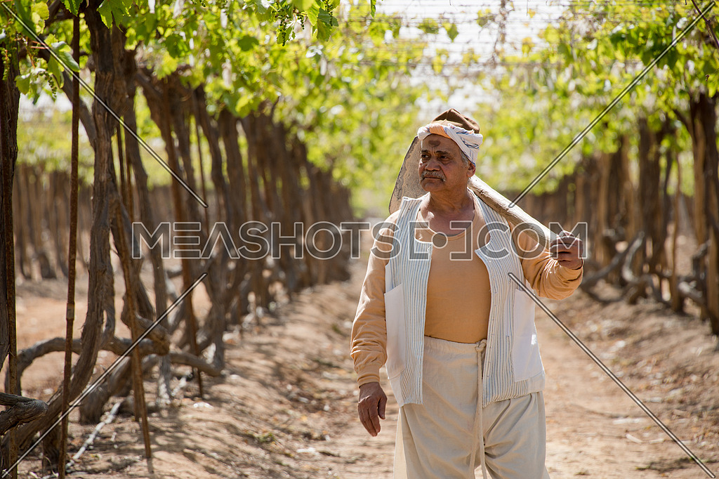 an egyptian farmer holding axe and walking in the field