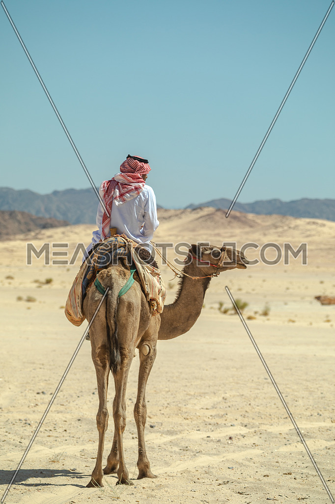 A bediuon male riding a camel at Wadi agarat area in Sinai by day.