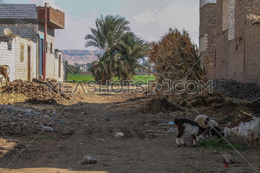 a photo of a village in rural area in Egypt, showing traditional houses, palm trees , agricultural lands and a mountain at the background