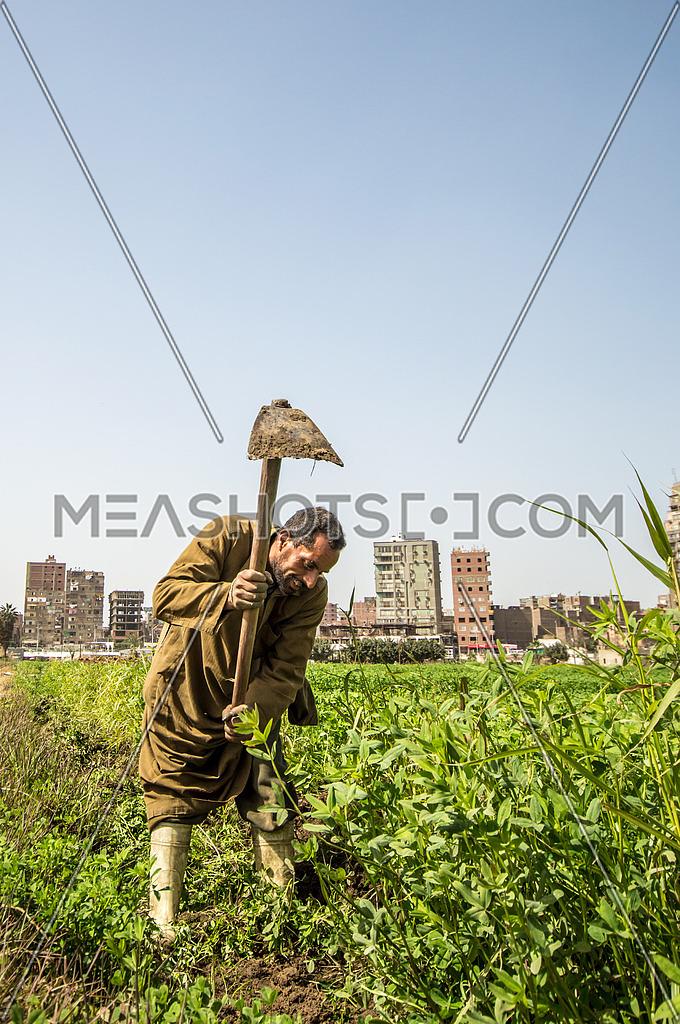 Farmer using his axe in the farm