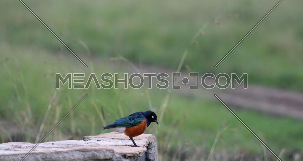 A Pretty bird on a rock