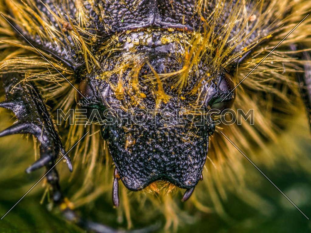 Caterpillar head shot in a close up