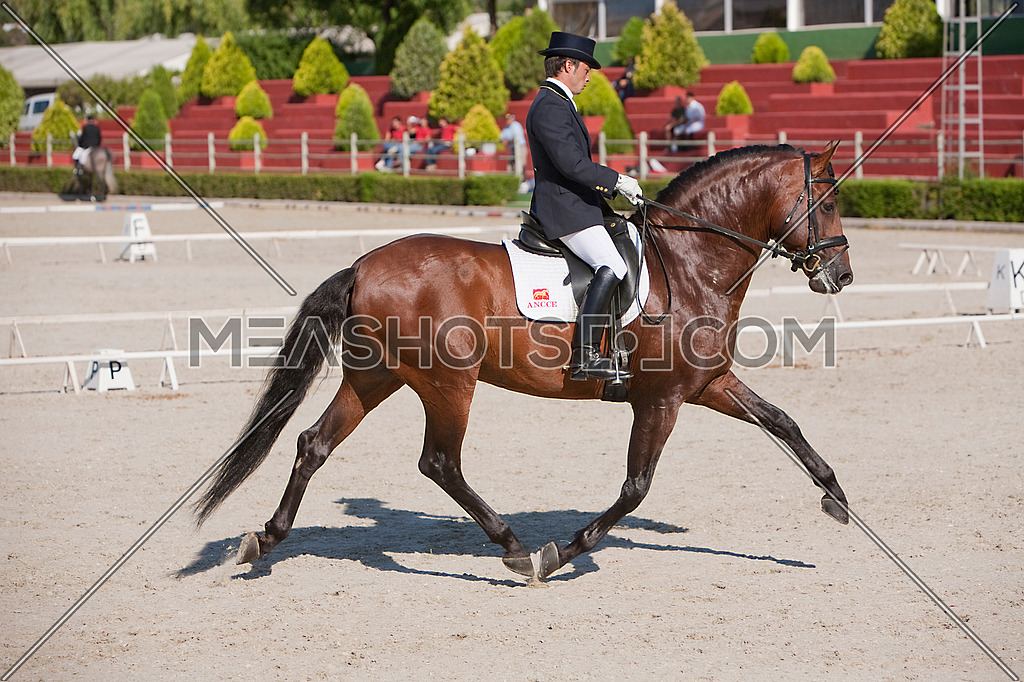 Rider competing in dressage competition classic, Estepona, Malaga Spain