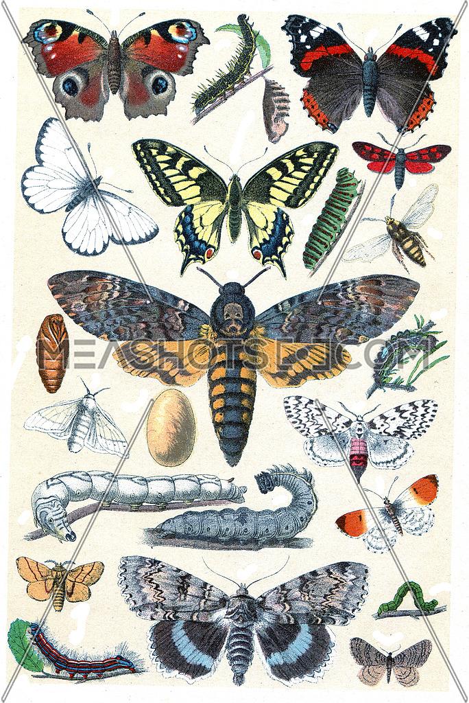 Legend of Plate XI, vintage engraved illustration. La Vie dans la nature, 1890.