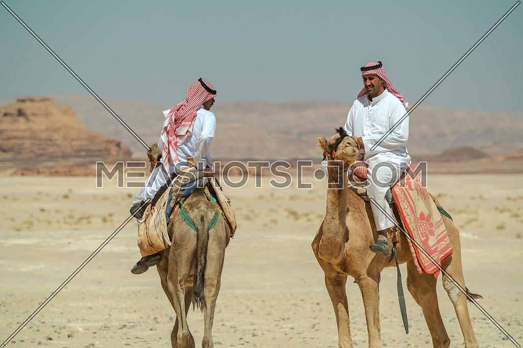 Two bediuon males riding a camels at Wadi Agarat area in Sinai at day.