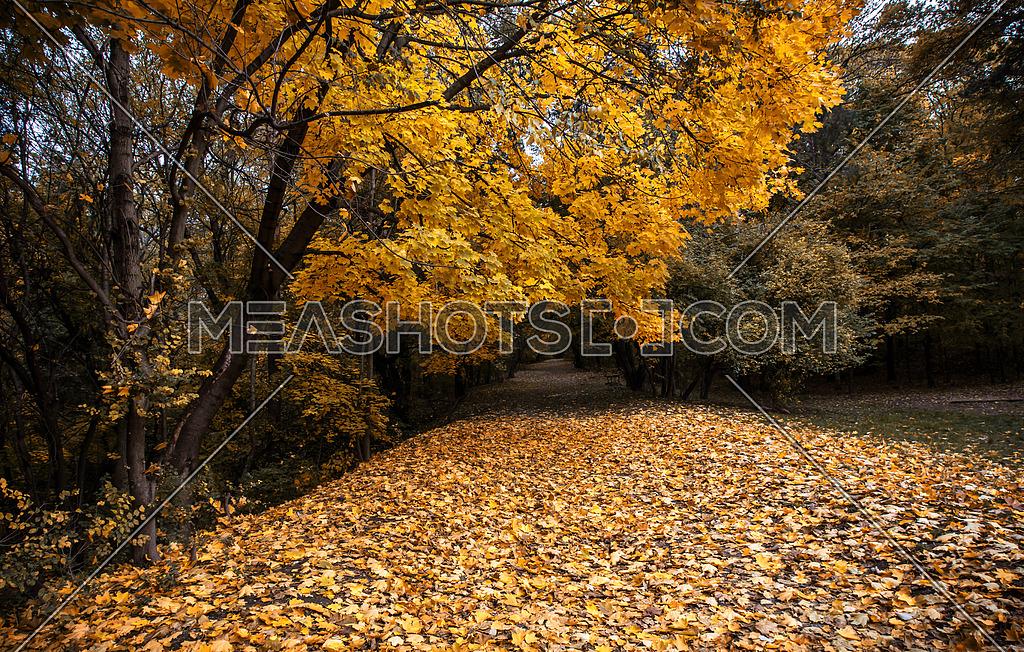 Autumn road Autumn landscape background
