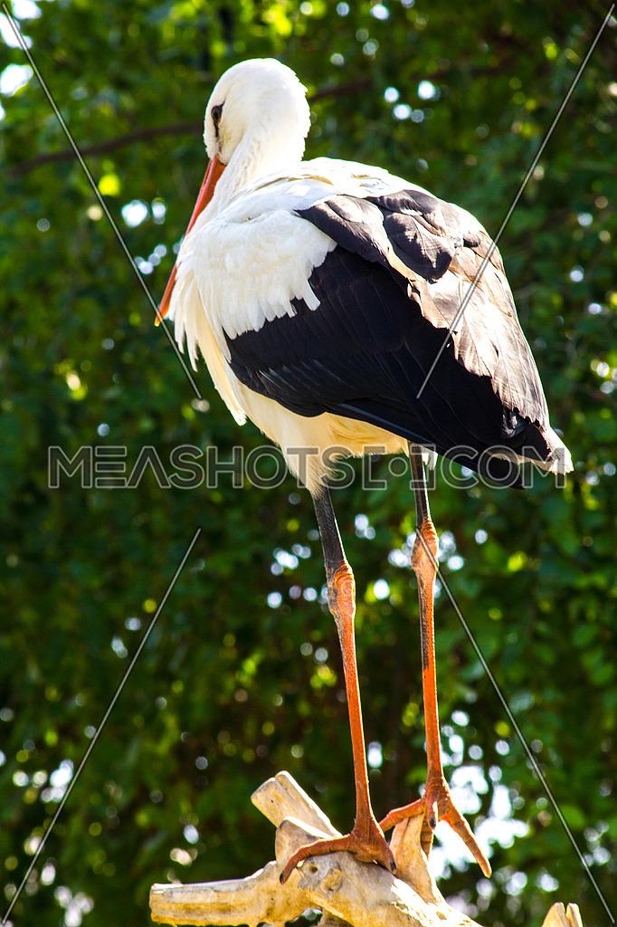 A bird standing tall on a tree branch