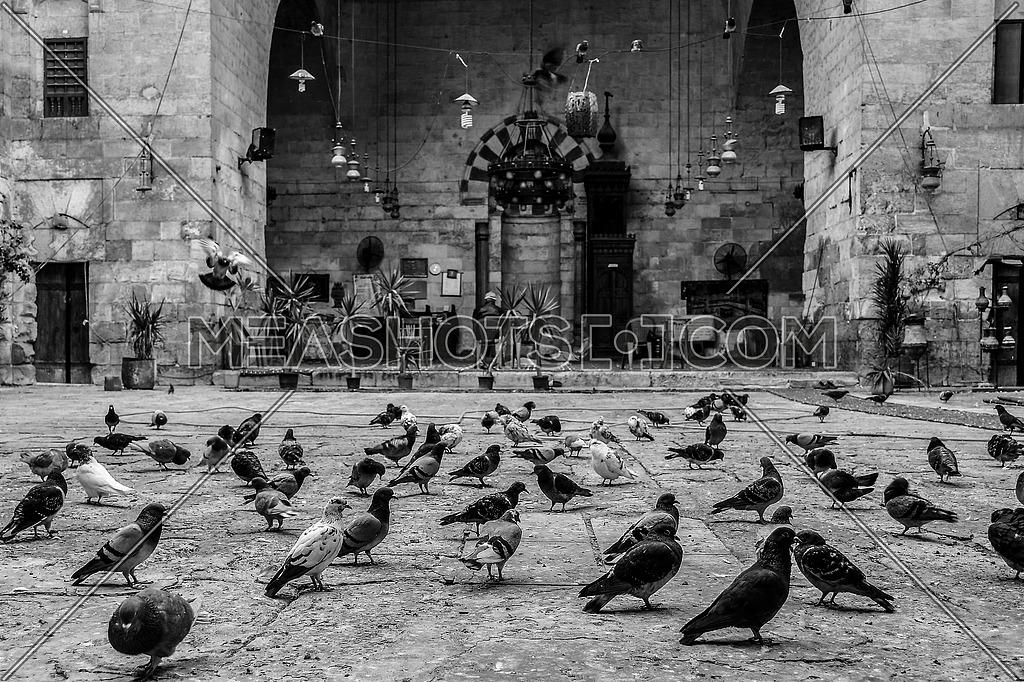 mid shot for Pigeons on the ground inside the The Khanqah of Baybars II Sharia Gamaliya in Cairo