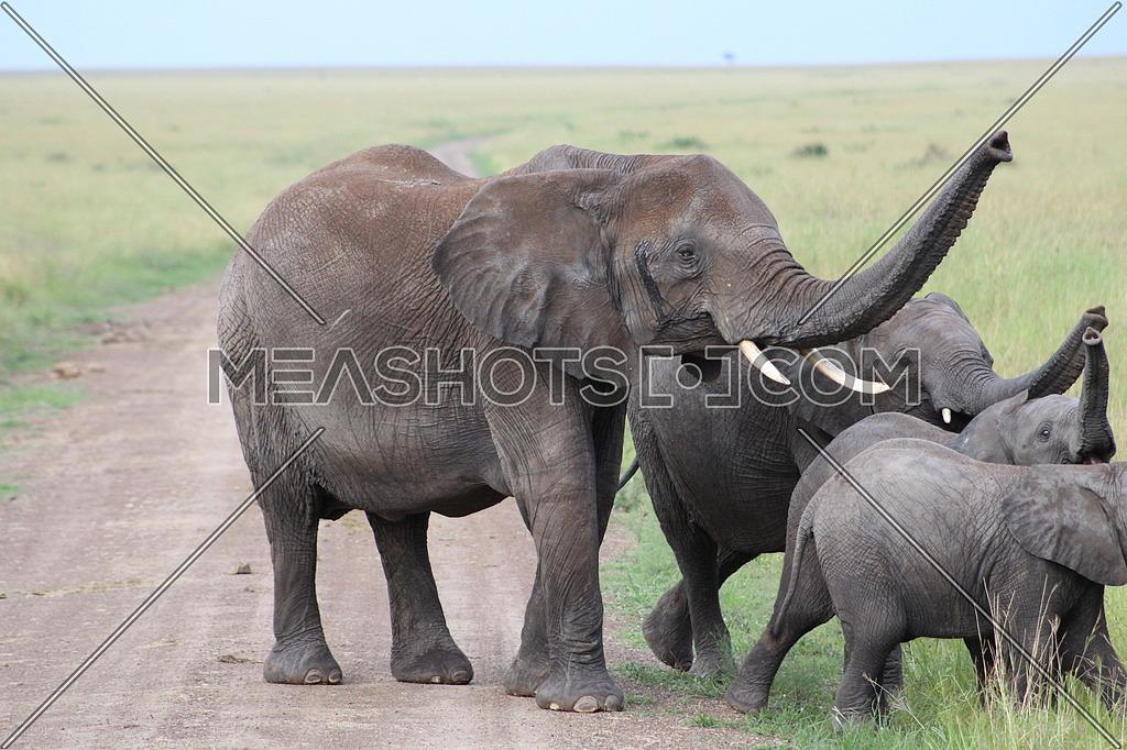 Elephant Famiy