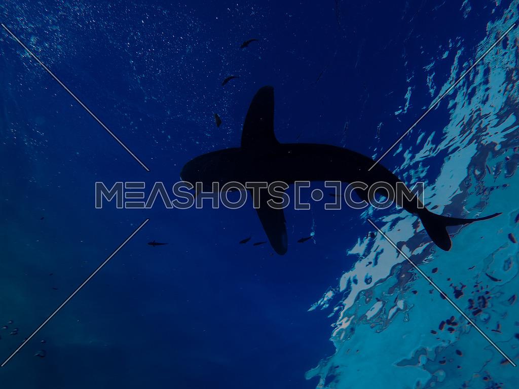 A shark underwater