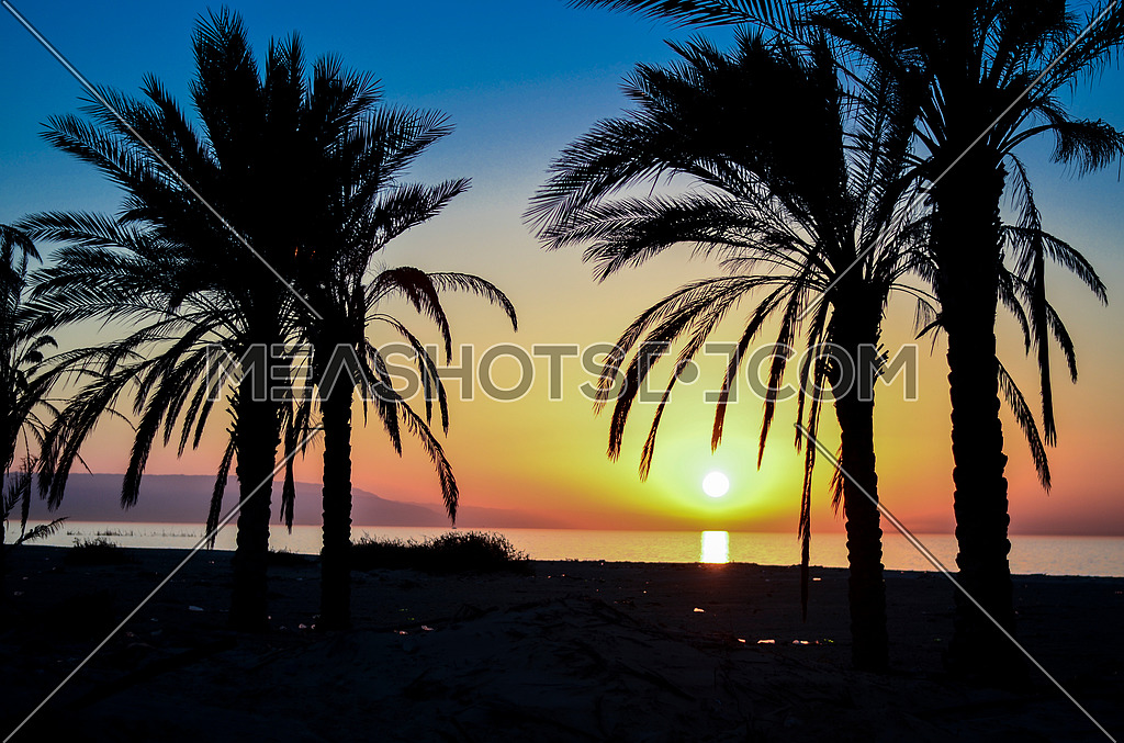 Palm trees by the beach at sunset