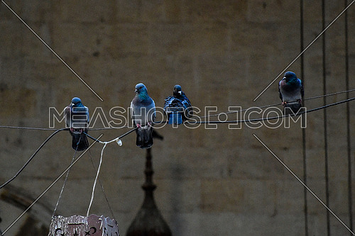 Close Shot for pigeons standing on a Wire inside The Khanqah of Baybars Sharia Gamaliya in Cairo