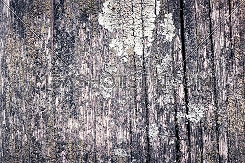 vintage of rustic wooden for background texture . Timber, surface