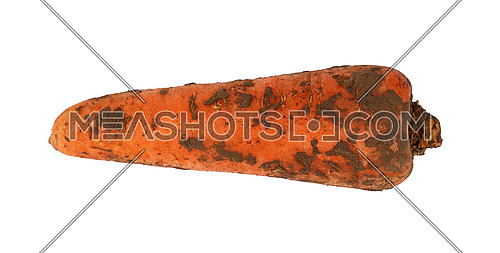 Close up of one big fresh dirty carrot in ground isolated on white background, elevated top view