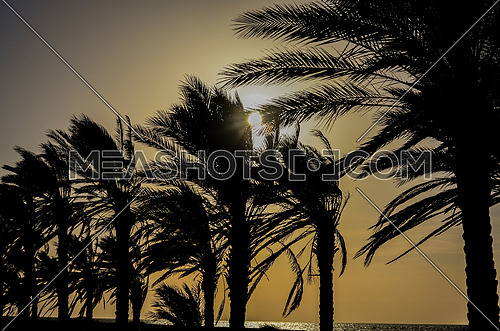 A silhouette view of palm trees on the beach by sun set