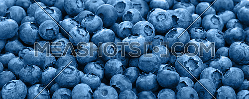 Blue toned fresh blueberry berries background pattern close up, low angle view