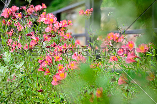 a garden full of purple and pink flowers