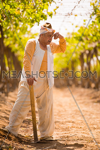 older middle eastern farmer working on a large modern farm