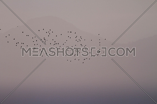 ground of a hazy sunset with a flock of starlings migrating in front of a barely visible mountain in gray tones