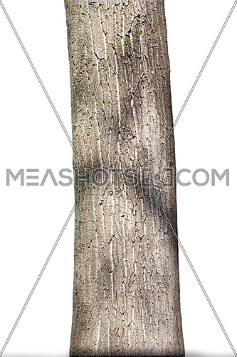 Tree Trunk Isolated On White Background