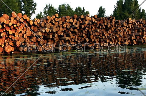 Wood logs by the river reflecting out of water