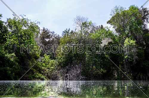 A lake surrounded by trees