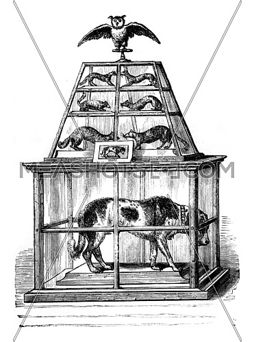 Barry Dog, the Museum of Bern, vintage engraved illustration. Magasin Pittoresque 1846.
