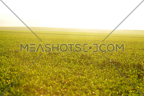 green grass on a background beautiful sunset in nature
