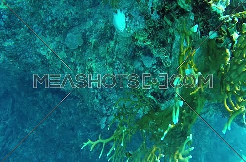 Follow Shot for Fishes and coral colony underwater at Red Sea