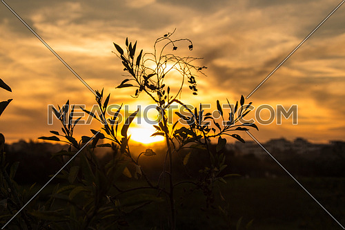 sun set in the horizon with a plant in the forground