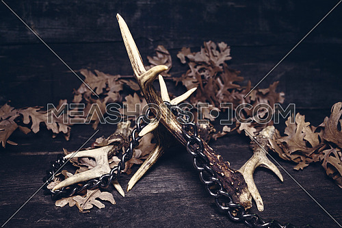 Deer Antlers Against Rustic Wooden Background Chained