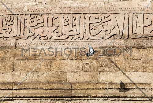 A dove flying near a wall of a mosque - Old Cairo - Egypt