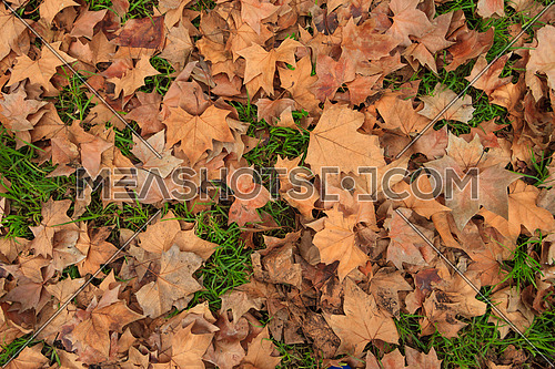 Dry Autumn leaves covering green grass