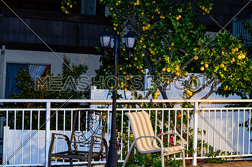 a balcony fence and a black street lantern with a lemon tree in the background of the fence