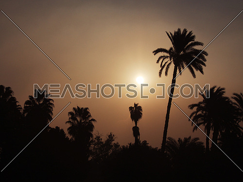 silhouette Palm trees at Sunrise in Cairo - Egypt