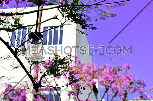 purple bell flower  tree with lights hanging from the tree, purpleish and blueish sky
