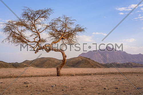 In the picture a valley in the desert with an Acacia tree with mountain rock and clouds in the background.