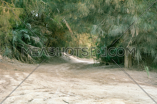 a Tree path in the desert