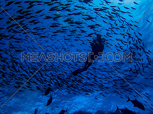 Diver surrounded with a school of fish