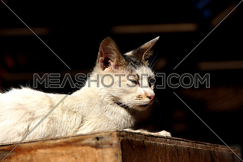 a photo for a street cat in Cairo