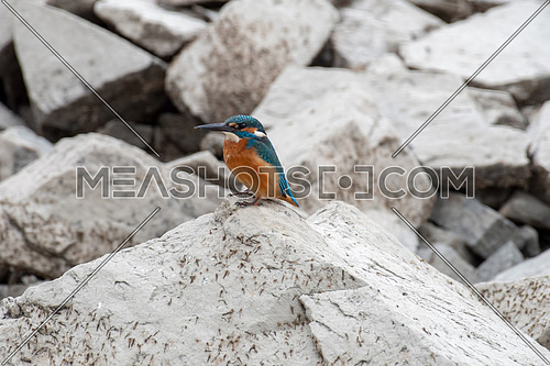 The common kingfisher (Alcedo atthis) also known as the Eurasian kingfisher and river kingfisher sitting on rocks