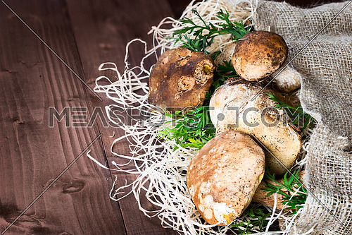 Pictured mushrooms(Boletus edulis,Porcini) - king of pore fungi,placed on straw and jute sack on wooden background.